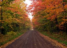 cabin, country roads, color, fall time, leav, lake, fall trees, the road, new hampshire