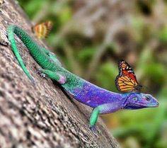 Beautiful lizard & butterfly!