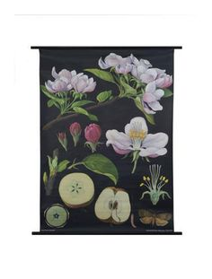 Canvasposter Äppelblom - 85x120 cm