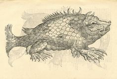 Monstrosus sur marinus. From: Ulissi ALDROVANDI [ALDROVANDUS]. Monstrorum historia, 1642.