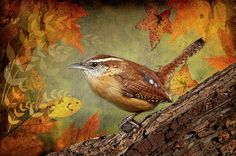 Wren In Autumn Photograph by Bonnie Barry