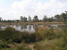 Kampina near Boxtel, Noord-Brabant, The Netherlands