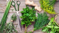 Heilkräuter: Wirkung und Zubereitung wichtiger Heilpflanzen