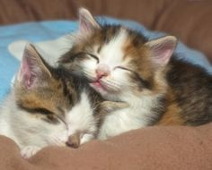 We Love Cats!:Bliss