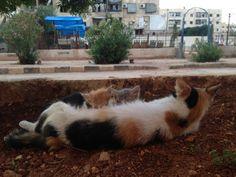 الأم .. الحُب الأول #حلب #سوريا #قطط #Cats Mama .. The first love ever #Aleppo #Syria