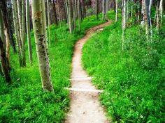 Lily Pad Lake hiking trail - Silverthorne, Colorado mrstalkstoomuch