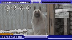 Share this Dog playing bust a move Animated GIF with everyone. Gif4Share is best source of Funny GIFs, Cats GIFs, Reactions GIFs to Share on social networks and chat.