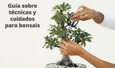 ¿Eres nuevo en el mundo de bonsai? No te preocupes, aquí encontrarás todo lo que necesitas saber sobre cómo cuidar un bonsai de manera adecuada.