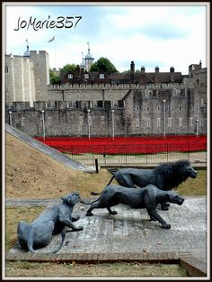 Wire lions at the Tower of London defend the sea of poppies