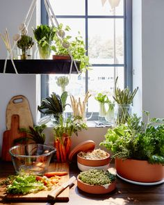 NOT ALL VEGGIES LOVE THE FRIDGE. In fact, many thrive just fine on a well-lit counter space. Consider a self-watering pot for herbs (they'll last so much longer) and a hanging tray (to make the most of your space). The added bonus, of course is that your kitchen will instantly look gorgeous!