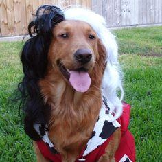 Dog costumes on pinterest dog costumes disney dogs and dog