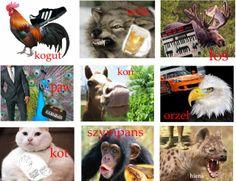 panowie zbiorczo, którego zwierzaka wybierasz?