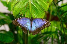 Da bruco a crisalide in un battito d'ali il volo degli insetti nell'eden perduto. Sull'Appia Pignatelli, dal 25 marzo sarà allestita