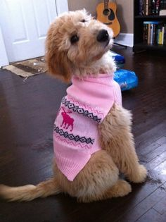 Layla the Goldendoodle puppy...these goldendoodles named Layla, it's a SIGN!!!