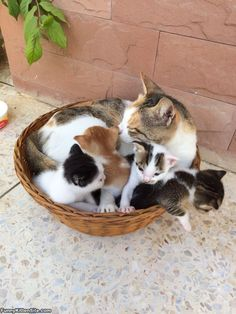 A_Basket_Full_Of_Them