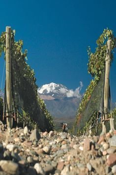 Mendoza Malbec, you will never go wrong with it. Broadbent - Broadbent #Malbec. #Mendoza, Argentina.