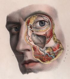 """djinn-gallery: Horrifyingly detailed images of. - djinn-gallery: """"Horrifyingly detailed images of surgical procedures from the early """" Head Anatomy, Anatomy Art, Anatomy Drawing, Medical Drawings, Medical Art, Science Illustration, Medical Illustration, Art Illustrations, Anatomy Reference"""