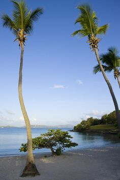 Caneel Bay Resort in the Caribbean is Surrounded by 7 Secluded Beaches - VacationIdea.com