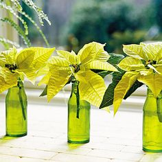 """lemon drop"" poinsettias in green vases. pretty for Christmas!"
