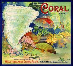 Highland, San Bernardino County Coral Tropical Fish Orange Citrus Fruit Crate Label Art Print. $9.99, via Etsy.