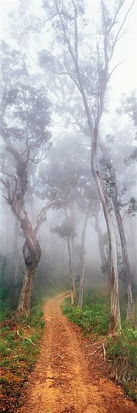 ✯ Misty Walk - Australia
