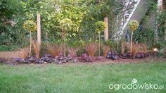 Mały ogródek, za i przed zabudową szeregową - Nicol21 - strona 94 - Forum ogrodnicze - Ogrodowisko