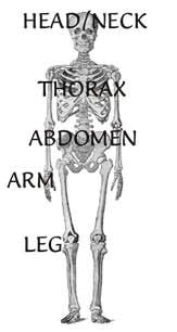 Instant Anatomy: aiding learning in human anatomy      Website: www.instantanatomy.net