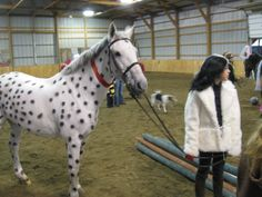 costumes for horses | How To Have A Happy Horsey Halloween