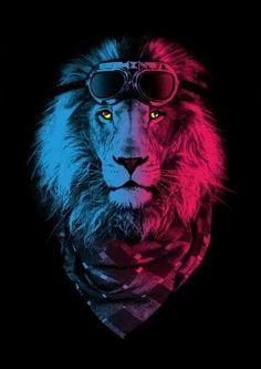 Otro leon!
