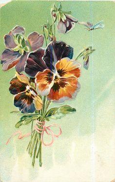 1907 bunch of orange-red/purple pansies tied with pink ribbon postcard