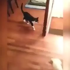 Knock the dog into another world - Lustiges tier - Perros Graciosos Funny Animal Memes, Cute Funny Animals, Funny Animal Pictures, Cute Baby Animals, Funny Dogs, Animals And Pets, Cute Cats, Funny Monkeys, Gato Gif