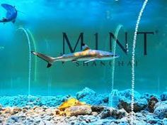 M1NT Club, Shanghai. Skip the Shanghai Aquarium and go here instead