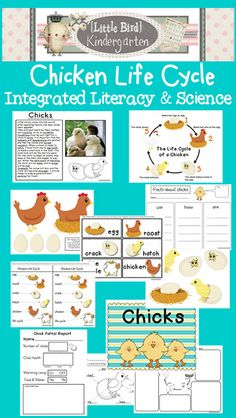 """""""This was a win! Such a fantastic unit!"""" Chicken LIfe Cycle Literacy and Science Unit - also included - Informational Text Activity with writing and science. First Grade Science, Kindergarten Science, Science Classroom, Teaching Science, Science Activities, Life Science, Teaching Resources, Teaching Ideas, Primary Resources"""