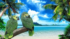 Parrots on the beach