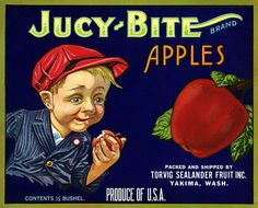 This fruit crate label was used on Jucy Bite Brand Apples, c. 1910: 'Jucy Bite Brand Apples. Packed and Shipped by Torvig Sealander Fruit Inc. Yakima Wash. Produce of U.S.A.' Crate labels were a frequ