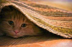 An orange cat hiding under a rug.
