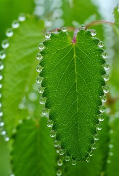This is how god gives jewelry to plants ..........wow this is amazingly beautiful.