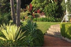 Image result for sub tropical garden ideas