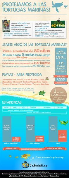 Protejamos a la Tortuga Marina  Infografía de Flora Fauna y Cultura de México