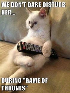 Page 11 of 715 - LOLcats is the best place to find and submit funny cat memes and other silly cat materials to share with the world. We find the funny cats that make you LOL so that you don't have to. Funny Animal Jokes, Funny Cat Memes, Cute Funny Animals, Cute Baby Animals, Funny Cute, Really Funny, Pet Memes, Hilarious, Cat Jokes