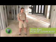 Six African Elephants, Three Camels and One Black Rhino can't crush or stain Mohawk SmartStrand Carpet! After three weeks inside the enclosures at the Dallas Zoo, SmartStrand Carpet comes out the winner! Watch this video to see how it comes clean and snaps back originally to shape!