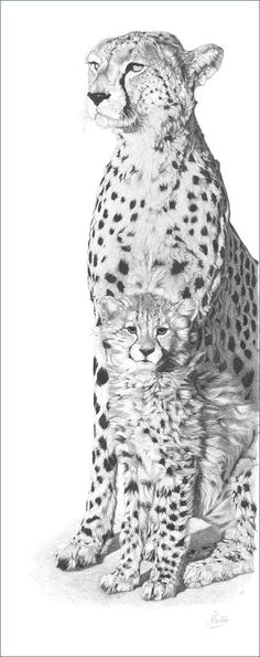 A pencil drawing of a cheetah mother (Acinonyx jubatus) and cub. Description from wildartworks.com. I searched for this on bing.com/images