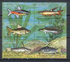 conjunto novo - c-939-44 - peixes de água doce brasil