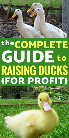 Raising Ducks for Beginners: Learn how to raise ducks on your homestead PLUS how to earn a profit from them. The ultimate guide to EVERYTHING you need to get started raising ducks! Portable Chicken Coop, Best Chicken Coop, Chicken Coop Plans, Building A Chicken Coop, Chicken Coops, Chicken Feeders, Raising Ducks, Raising Chickens, How To Raise Ducks