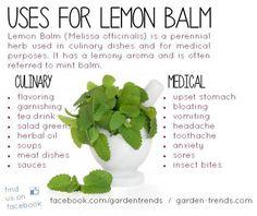Uses for Lemon Balm