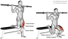 Barbell Bulgarian split squat (aka barbell single leg split squat). A compound lower-body exercise. Target muscles: Gluteus Maximus and Quadriceps (Rectus Femoris, Vastus Lateralis, Vastus Medialis, and Vastus Intermedius). Synergistic muscles: Adductor Magnus and Soleus. Dynamic stabilizers (not highlighted): Hamstrings and Gastrocnemius. Visit site to learn proper form and safety.