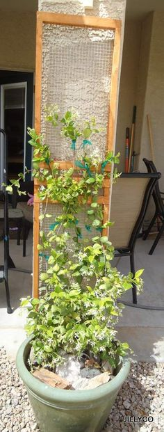 Trellis For my Jasmine plant.