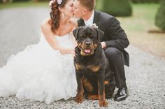 Bride and groom with a rottweiler | Caroline Lima Photography | #wedding #dog