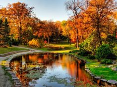 Top 10 spots to see fall foliage in Canada: From Winnipeg to Quebec's Eastern Townships O Canada, Canada Travel, Canada Funny, All Nature, Amazing Nature, Nature Pictures, Ontario, Fall Pictures, Amazing Pictures
