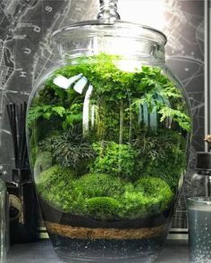 Terrarium - You are in the right place about Miniature Garden gate Here we offer you the most beautiful pictur Moss Garden, Succulents Garden, Garden Gate, Garden Tools, Terrarium Diy, Glass Terrarium Ideas, Terrarium Closed, Bottle Terrarium, Water Terrarium
